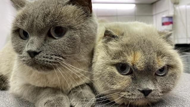 Salgın süreci kedilerin psikolojisini bozdu