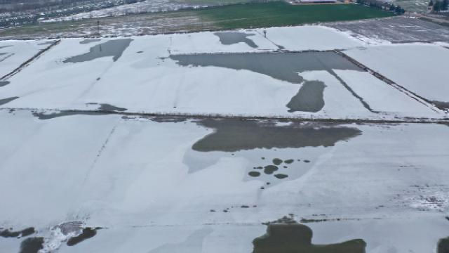 Edirnede tarlalar buz tuttu