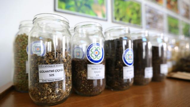 Muğlada üretilen yerel tohumlar toprakla buluşuyor