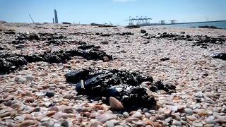 İsrail televizyonu: İsrail kıyılarındaki çevre felaketine Yunan tankeri neden oldu