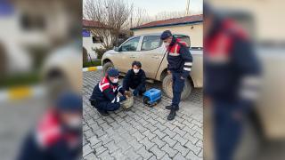 Düzce'de jandarma tarafından bulunan yaralı doğan tedavi altına alındı