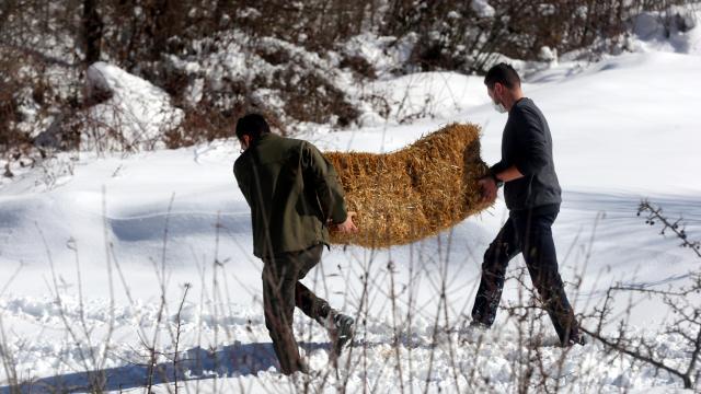 Bolu Dağındaki yılkı atlarına yem bırakıldı