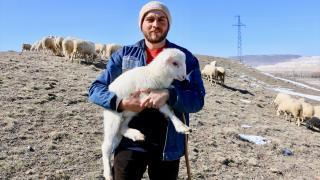 Avukatlığı bıraktı, çobanlığı tercih etti