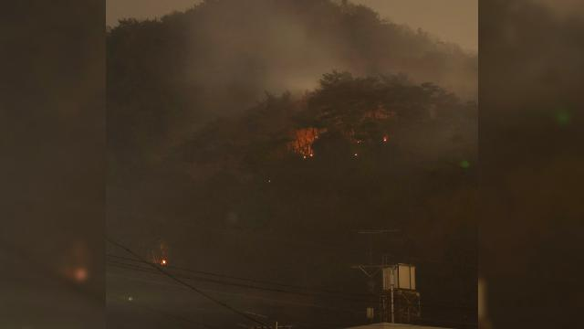 Japonyadaki yangında 100 hektarlık ormanlık alan zarar gördü