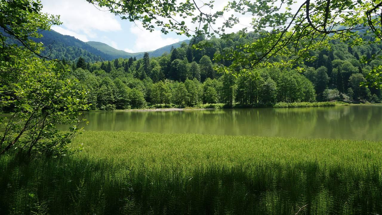Türkiye ağaçlandırmada Avrupa'da birinci oldu