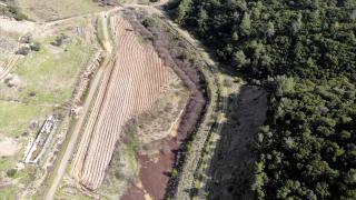 İzmir'de 'bal ormanı' için 42 bin fidan dikildi