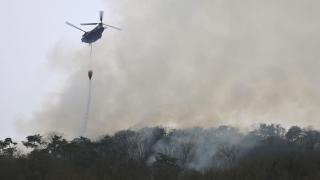 Japonya'da 21 Şubat'tan beri süren yangında 106 hektarlık ormanlık alan zarar gördü