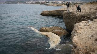 12 metrelik ölü balina yavrusu kıyıya vurdu