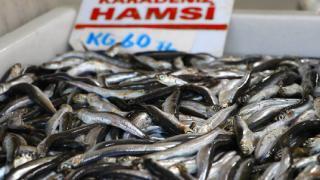 Deniz salyası hamsi ve istavritin fiyatını 60 liraya çıkardı