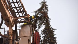 15 metrelik ağaçta mahsur kalan kediyi itfaiye kurtardı