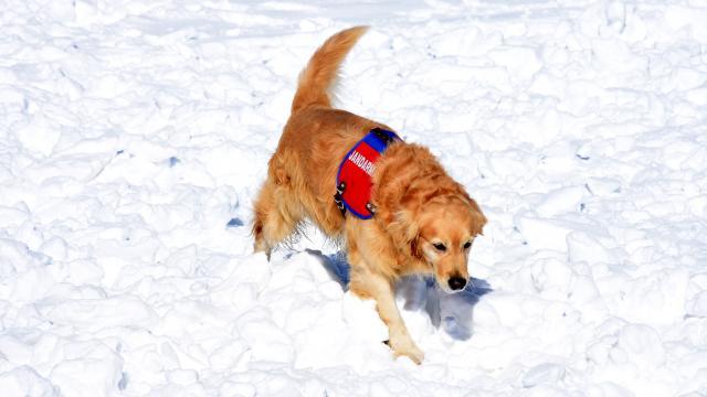 """Arama kurtarma köpeği """"Girgin"""" jandarmaya hayat kurtaran operasyonlarda güç katıyor"""