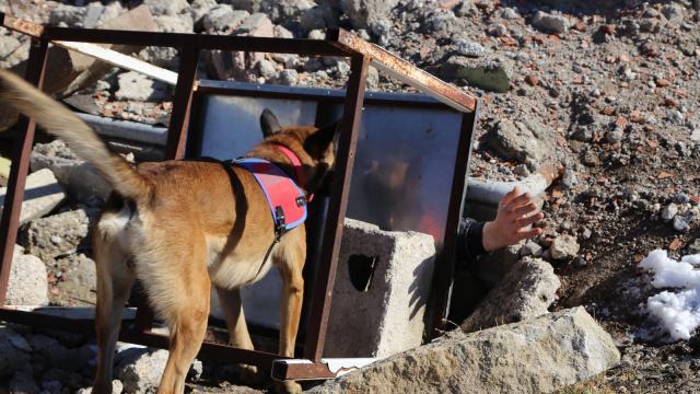 JAKEMde doğal afetlerde kullanılan arama-kurtarma köpekleri ile tatbikat düzenlendi