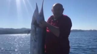 KKTC'de 40 kiloluk dev kılıç balığı görenleri şaşırttı