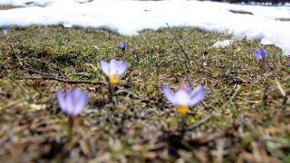 Bolu'da baharın müjdecisi kır çiçekleri
