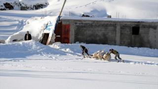 Bitlis'te besicilerin zorlu kış mesaisi