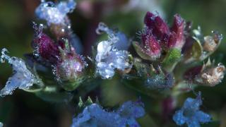 Meteoroloji'den çiftçilere 'zirai don' uyarısı