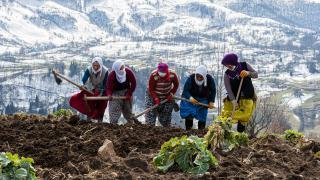 Karadeniz'in çalışkan kadınlarını pandemi de durduramadı