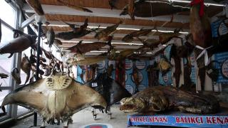 Balıkçıdan deniz canlıları müzesi
