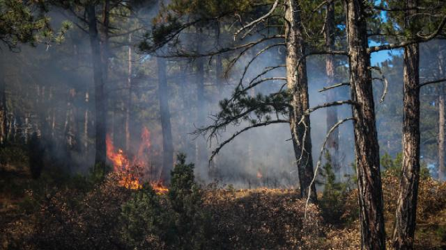 Antalyada yakalanan PKKlı ormanlık alanda yangın çıkardığını itiraf etti