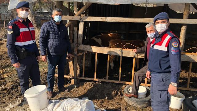 Zonguldakta jandarma ekipleri kaybolan 5 ineği drone yardımıyla buldu