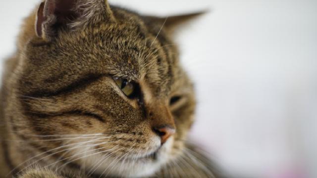 Fareler için konulan zehir anne kediyi zehirledi