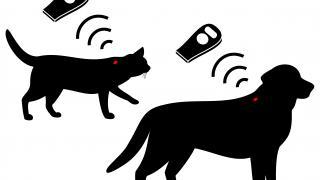 Mikroçip uygulamasıyla kedi ve köpekler kaybolduğunda sahipleri bulunabilecek