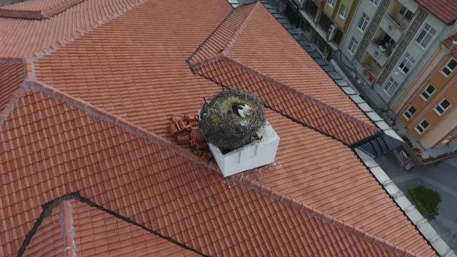 Sındırgının sembolü Sağdıç leylek belediye binasının çatısındaki yuvasına yerleşti