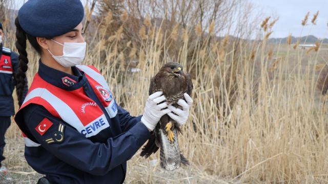 Kırıkkalede yaralı bulunan paçalı şahin tedavisinin ardından doğaya bırakıldı