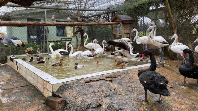 İstanbulda kaçak kuş operasyonu: 185 yabani kuşa el konuldu