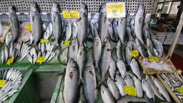 Balık tezgahlarında kofana bolluğu