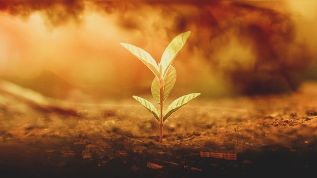 Çöl tozu bitkilere yararlı mı?