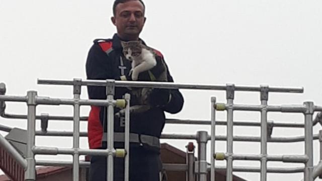 Köpeklerden kaçarken, çıktığı ağaçta kalan kediyi itfaiyeciler kurtardı