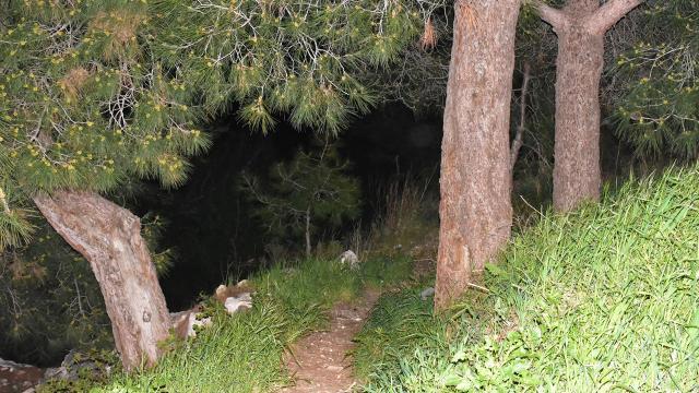 İzmirde ormanlık alanda kafatası ve kaburga bulundu