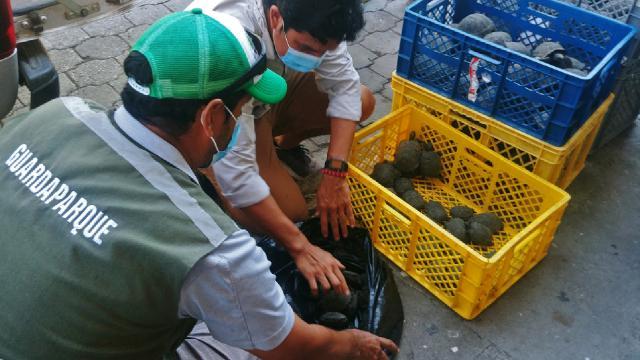 Valizin içinden 185 kaplumbağa çıktı