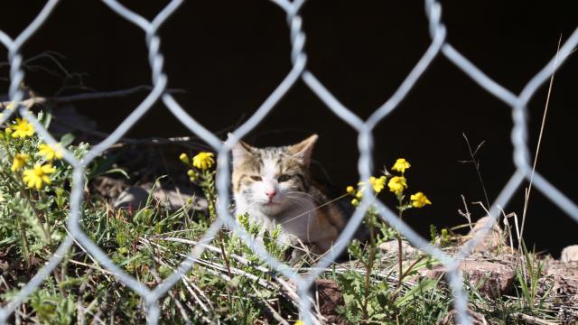 Tel örgülerde mahsur kalan kedi kurtarıldı