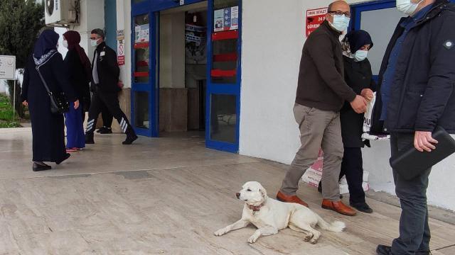 Sahibi tedavi gören Pamuk 14 gün hastane kapısında bekledi