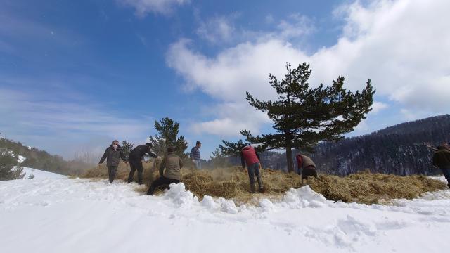 Boluda kışın yaban hayvanları için doğaya 35 ton 600 kilogram yem bırakıldı