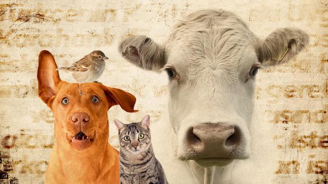 Hayvanların korunmasına ilişkin kanun Resmi Gazetede