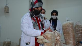 Siverekli lise öğrencileri okulun bodrum katında mantar üretimine başladı