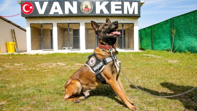 """Narkotik köpeği """"Magnum"""" Vandaki ilk operasyonundan tam not aldı"""