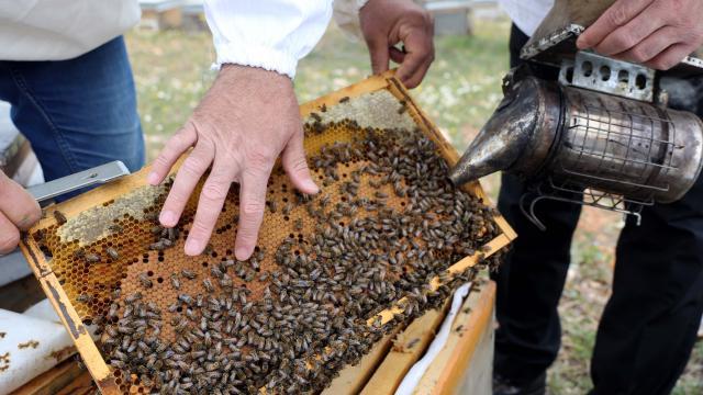 Gaziantepte bal üretimi 10 yılda 42 kat arttı