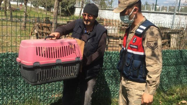 Diyarbakırda jandarmanın bulduğu yaralı kızıl şahin tedavi altına alındı