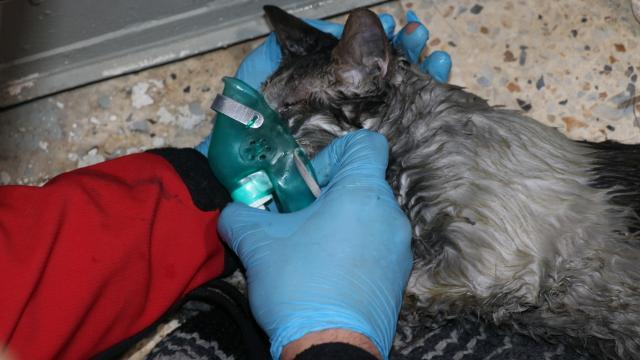 Yangında mahsur kalan vatandaş ile kedisi kurtarıldı