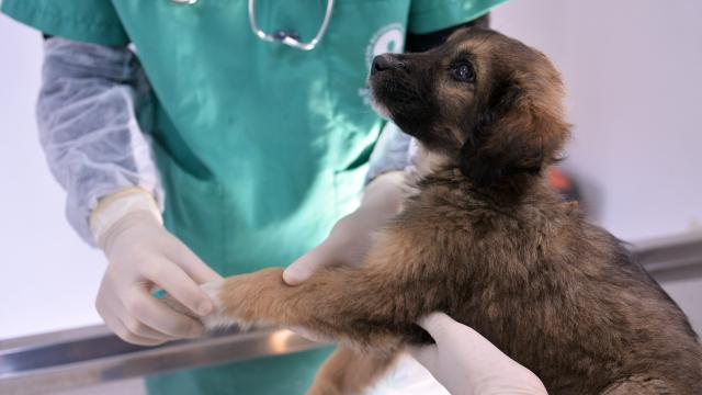 Sokak hayvanlarına hastane konforunda tedavi ve bakım hizmeti sunuluyor