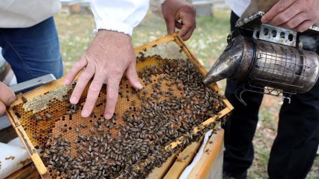 Gaziantepli arıcılar bu yıl 500 ton bal üretmeyi hedefliyor