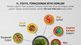 Eski Türkçede Bitki İsimleri