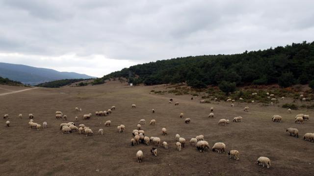 Tokatta, küçükbaş hayvancılıkta Türkiyeye örnek olan projede dağıtılan koyun sayısı 45 bine ulaştı