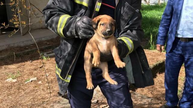 Foseptiğe düşen yavru köpek kurtarıldı