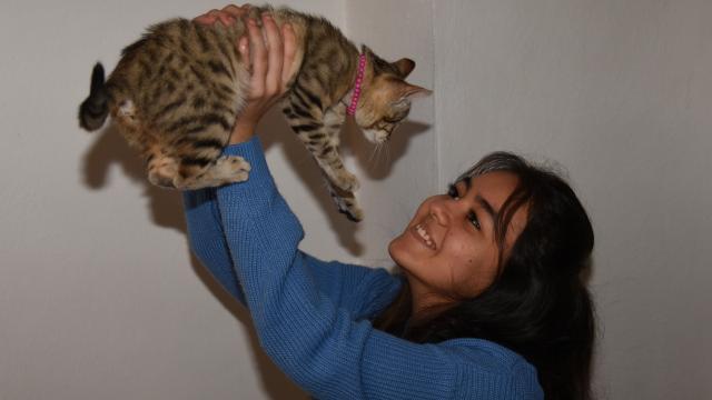 Giresunda lise öğrencisi yaralı bulduğu kediyi tedavi ettirip sahiplendi