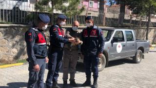 Eskişehir'de yaralı halde bulunan baykuş tedaviye alındı